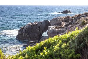 Steinlaus im Urlaub vor Sardinien. Foto: Ulrich van Stipriaan